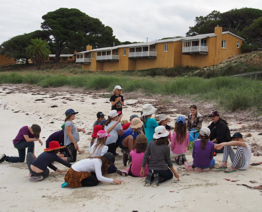 kids at the beach learning