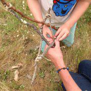 putting sticks together