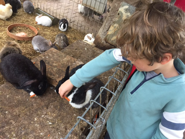 feeding rabbit farm