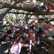 Lots of kids in a tree