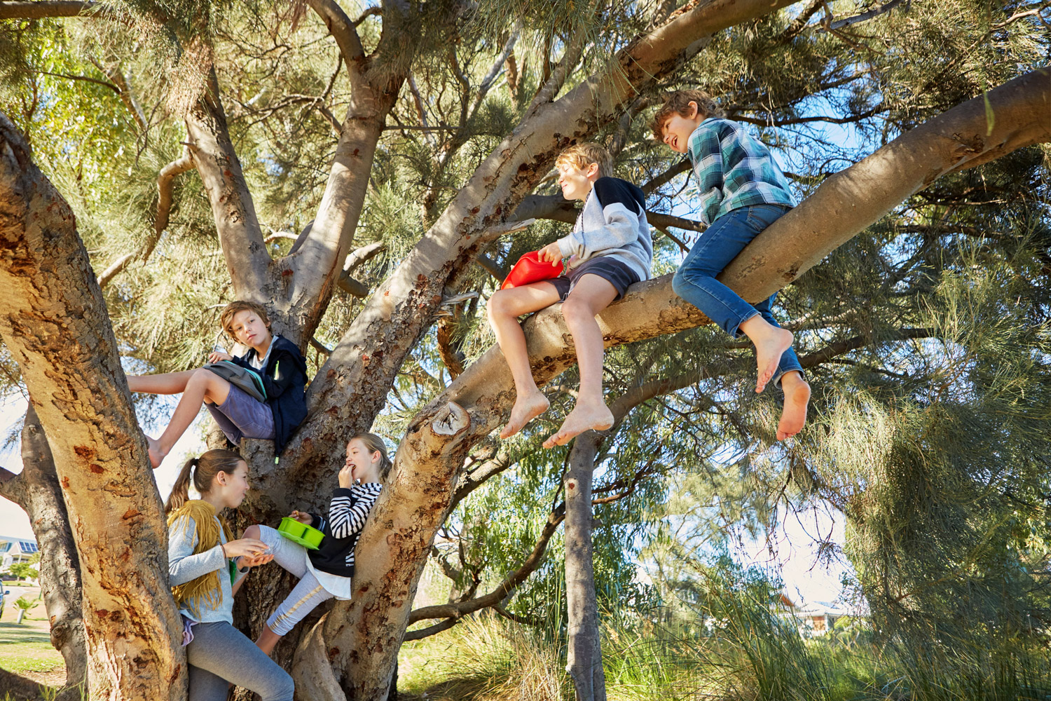 children sitting in a large tree