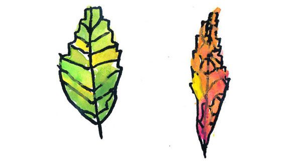 kids drawing of leaves