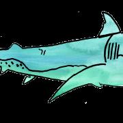 Drawing of shark