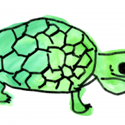 Drawing of a turtle